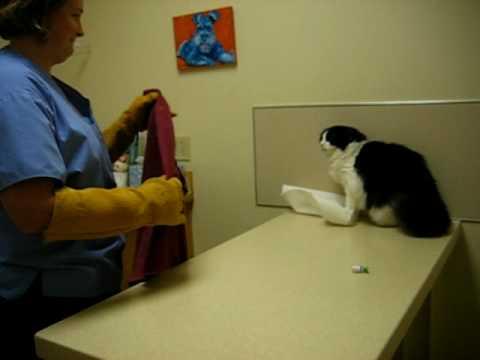 female cat keeps peeing on everything